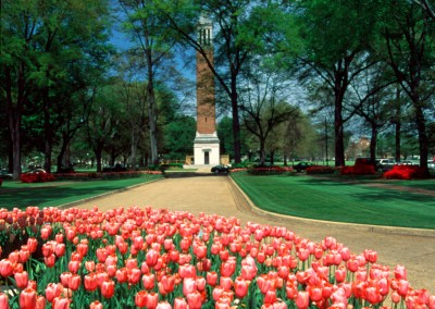 Denny Chimes Tulips