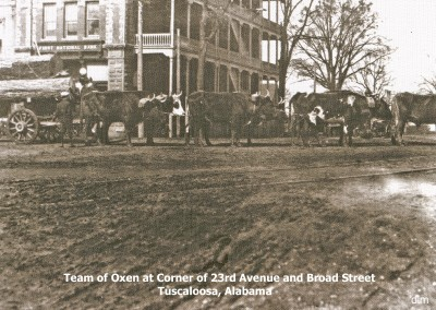Team of oxen at 23rd Avenue and Broad Street (University Boulevard) copy